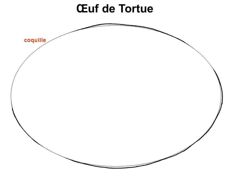 Œuf de Tortue Réserves nutritives embryon coquille