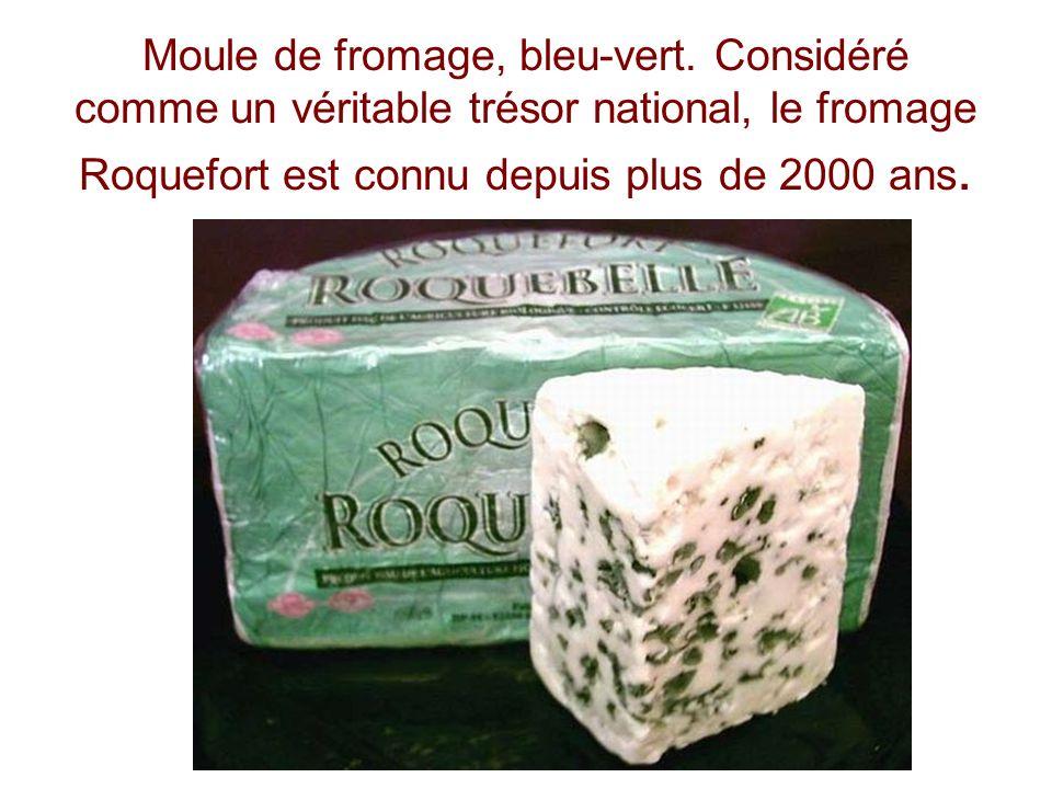 Moule de fromage, bleu-vert. Considéré comme un véritable trésor national, le fromage Roquefort est connu depuis plus de 2000 ans.