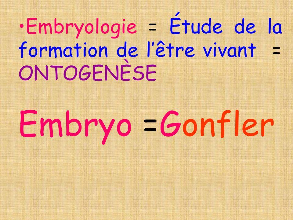 Embryologie = Étude de la formation de lêtre vivant = ONTOGENÈSE Embryo =Gonfler