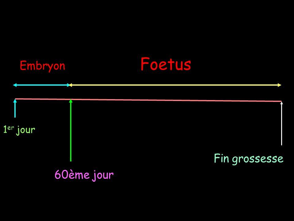 1 er jour 60ème jour Fin grossesse Foetus Embryon