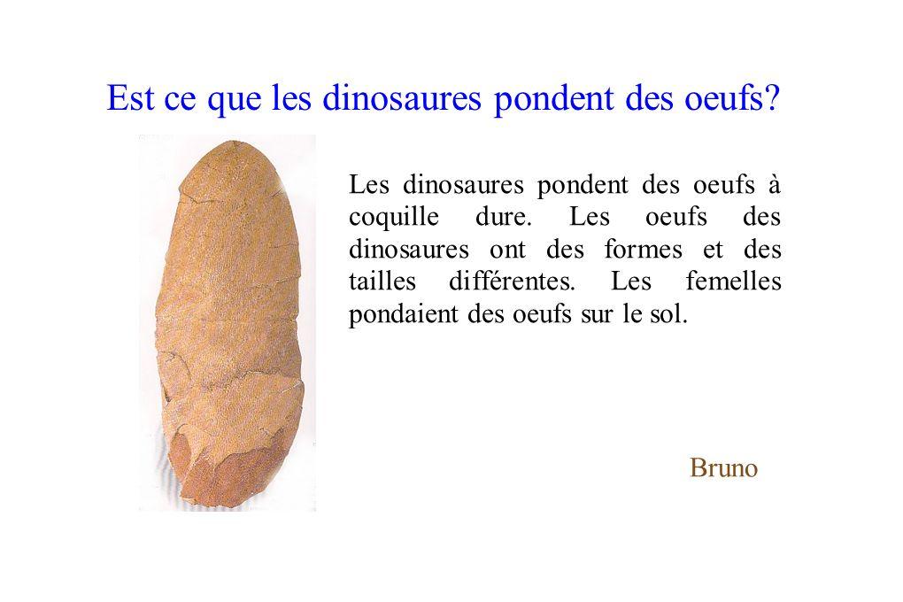 Est ce que les dinosaures pondent des oeufs? Les dinosaures pondent des oeufs à coquille dure. Les oeufs des dinosaures ont des formes et des tailles