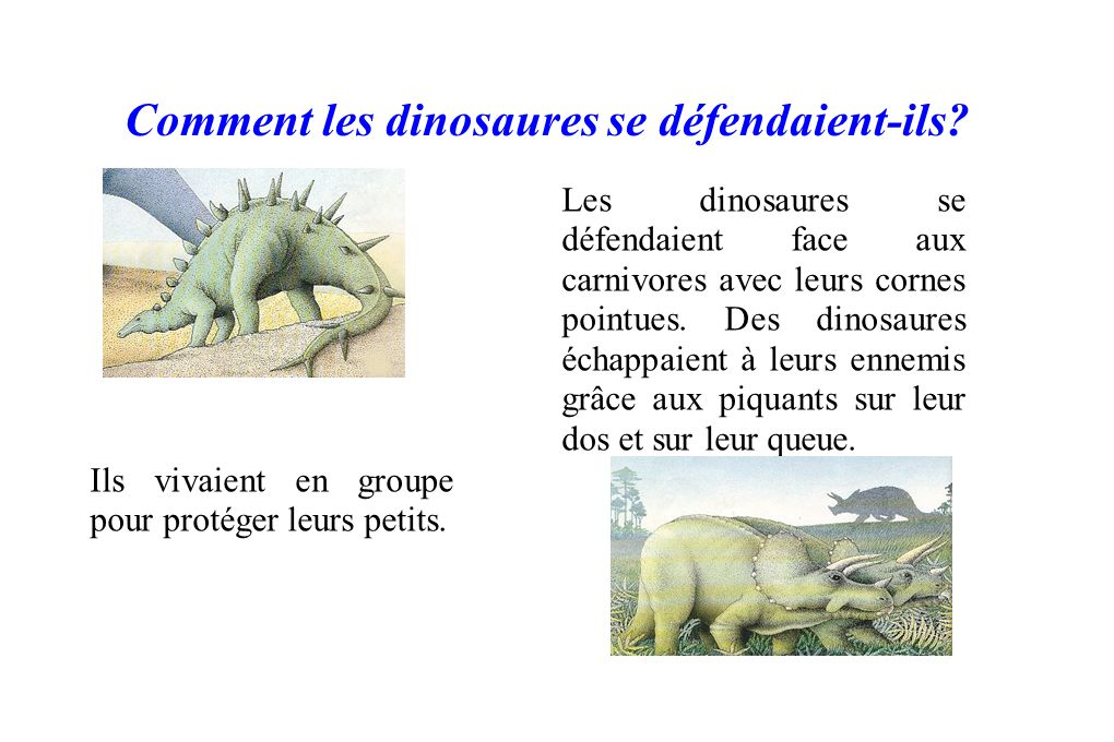 Comment les dinosaures se défendaient-ils? Les dinosaures se défendaient face aux carnivores avec leurs cornes pointues. Des dinosaures échappaient à