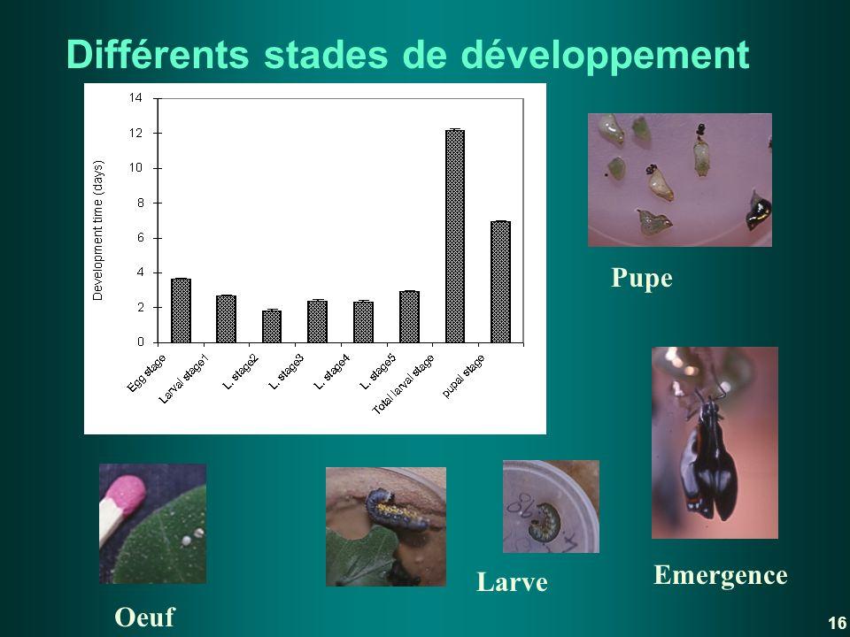 Différents stades de développement Oeuf Larve Pupe Emergence 16