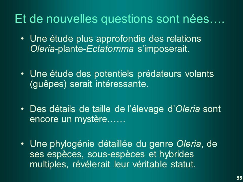 Et de nouvelles questions sont nées…. Une étude plus approfondie des relations Oleria-plante-Ectatomma simposerait. Une étude des potentiels prédateur