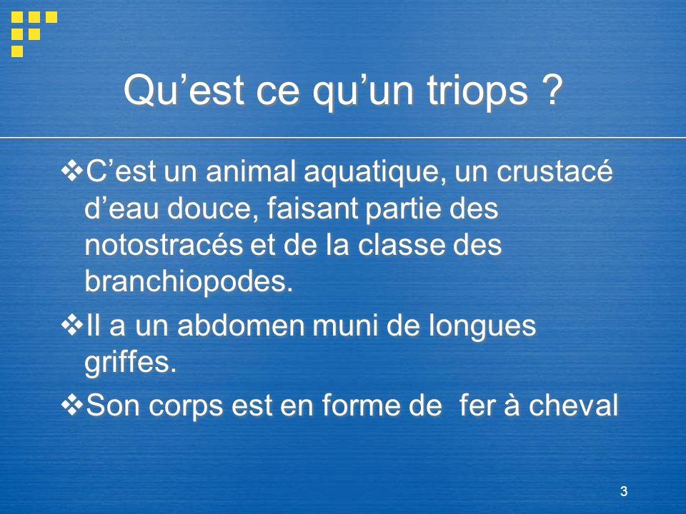 3 Quest ce quun triops ? Cest un animal aquatique, un crustacé deau douce, faisant partie des notostracés et de la classe des branchiopodes. Il a un a