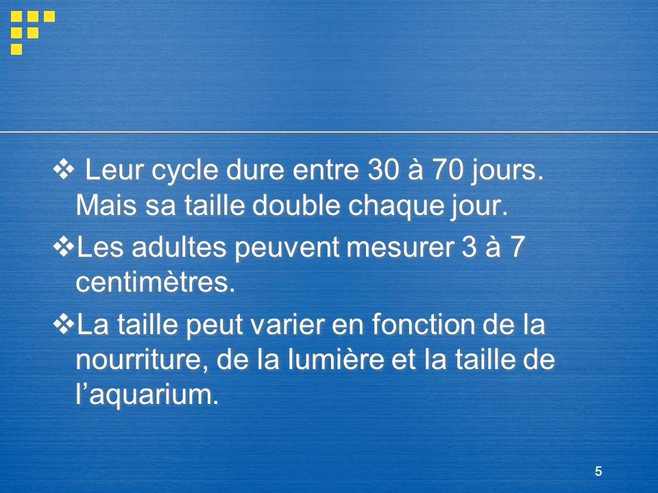 5 Leur cycle dure entre 30 à 70 jours. Mais sa taille double chaque jour. Les adultes peuvent mesurer 3 à 7 centimètres. La taille peut varier en fonc