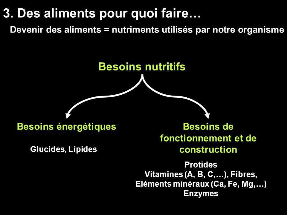 3. Des aliments pour quoi faire… Devenir des aliments = nutriments utilisés par notre organisme Besoins nutritifs Besoins énergétiquesBesoins de fonct