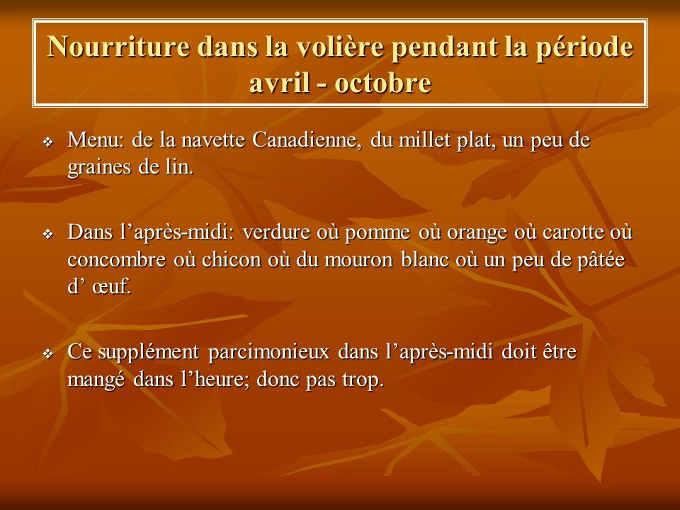 Nourriture dans la volière pendant la période avril - octobre Menu: de la navette Canadienne, du millet plat, un peu de graines de lin. Menu: de la na