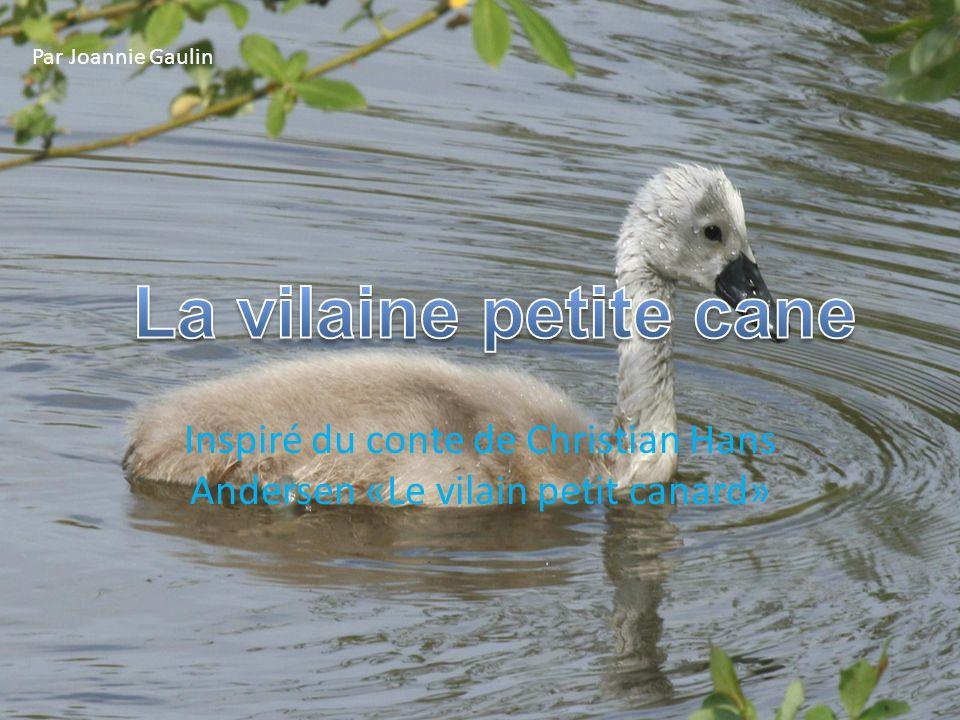 Inspiré du conte de Christian Hans Andersen «Le vilain petit canard» Par Joannie Gaulin