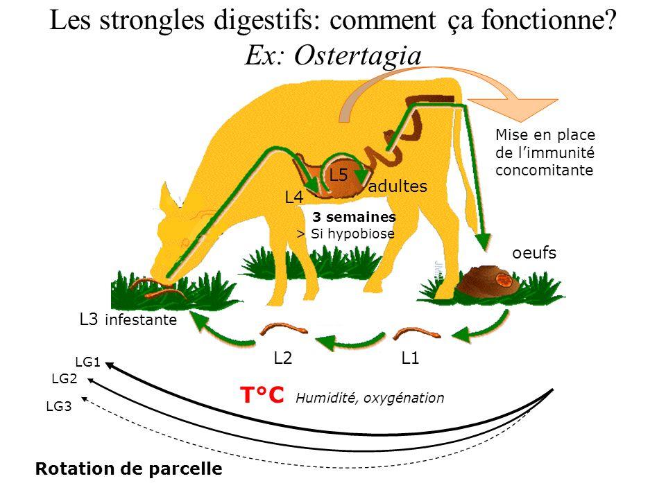 Les strongles digestifs: comment ça fonctionne? Ex: Ostertagia L1L2 L3 infestante oeufs > Si hypobiose 3 semaines L4 L5 adultes T°C Humidité, oxygénat