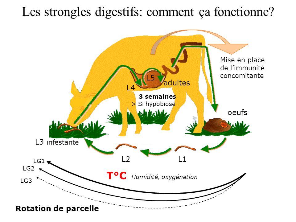 Les strongles digestifs: comment ça fonctionne? L1L2 L3 infestante oeufs > Si hypobiose 3 semaines L4 L5 adultes T°C Humidité, oxygénation LG1 LG2 LG3