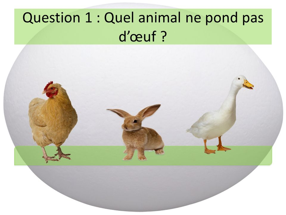 Question 1 : Quel animal ne pond pas dœuf ?