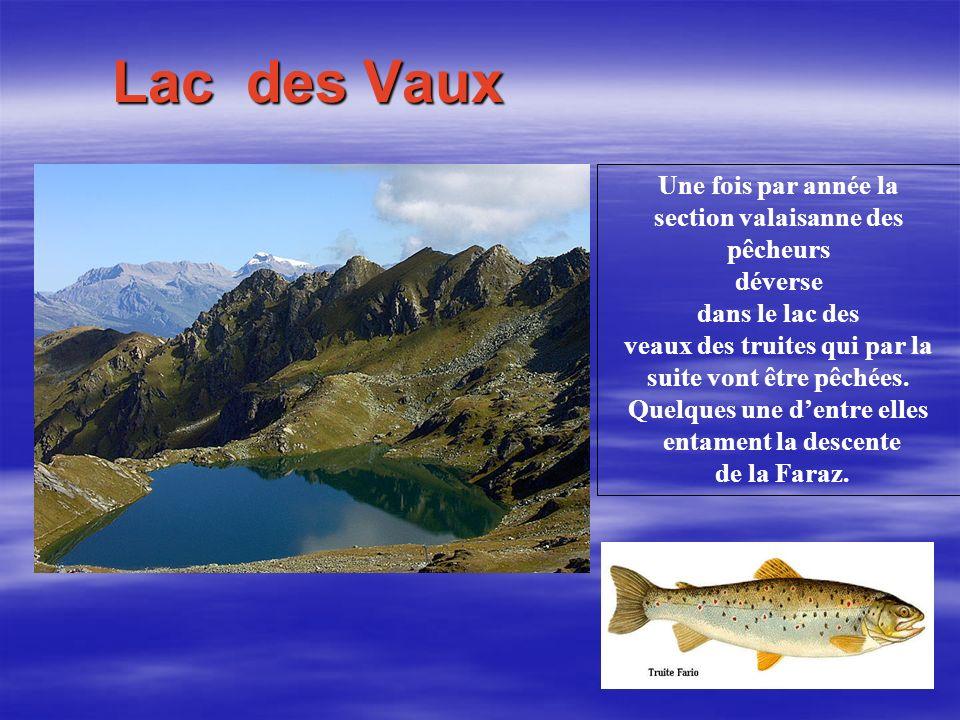 Lac des Vaux Une fois par année la section valaisanne des pêcheurs déverse dans le lac des veaux des truites qui par la suite vont être pêchées.