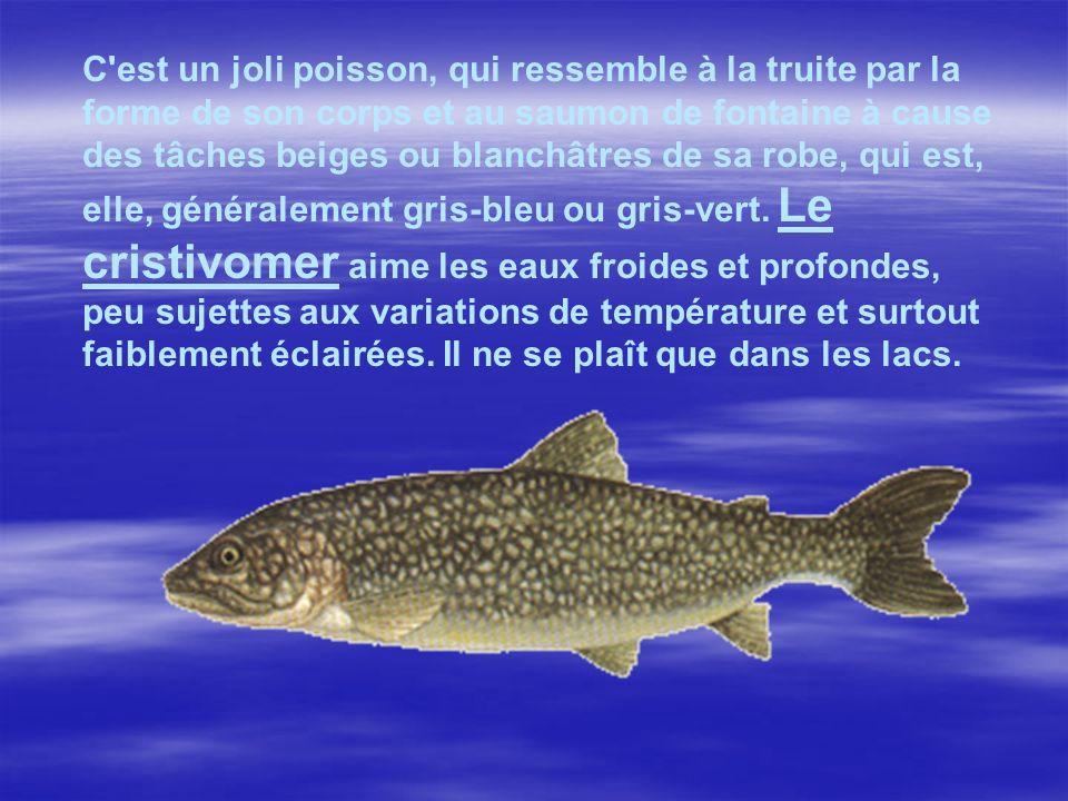 C est un joli poisson, qui ressemble à la truite par la forme de son corps et au saumon de fontaine à cause des tâches beiges ou blanchâtres de sa robe, qui est, elle, généralement gris-bleu ou gris-vert.