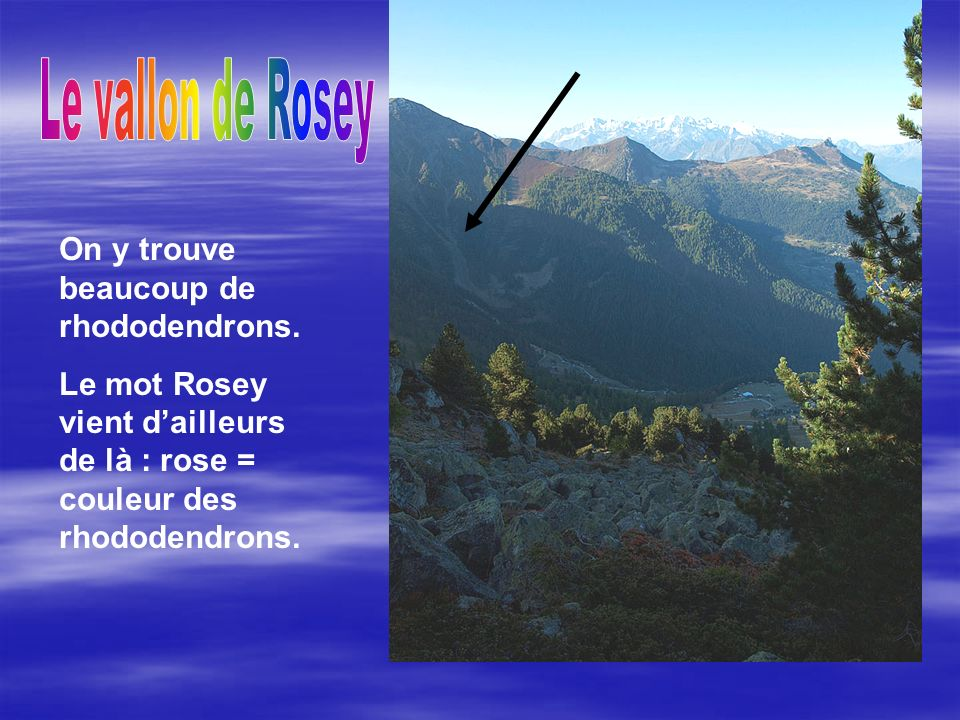 On y trouve beaucoup de rhododendrons.