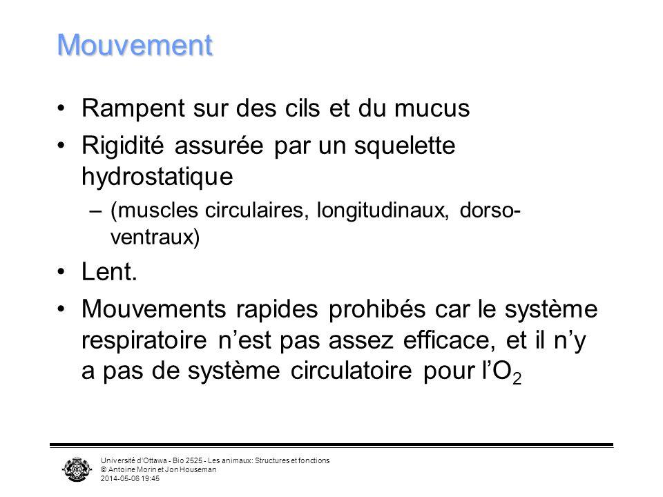 Université dOttawa - Bio 2525 - Les animaux: Structures et fonctions © Antoine Morin et Jon Houseman 2014-05-06 19:47 Mouvement Rampent sur des cils e