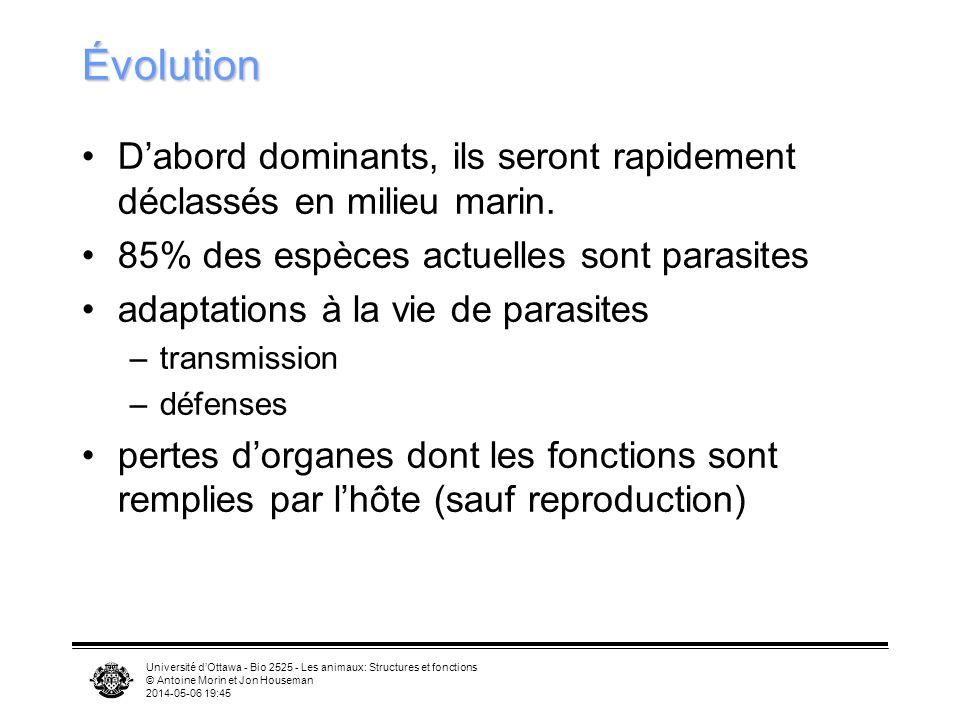 Université dOttawa - Bio 2525 - Les animaux: Structures et fonctions © Antoine Morin et Jon Houseman 2014-05-06 19:47 Évolution Dabord dominants, ils