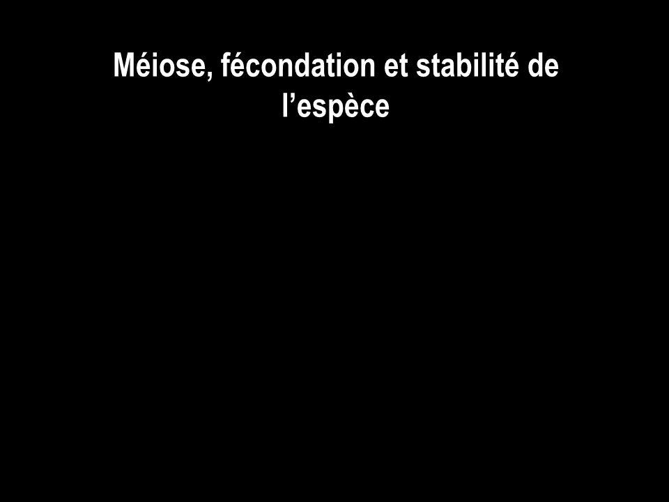 Méiose, fécondation et stabilité de lespèce