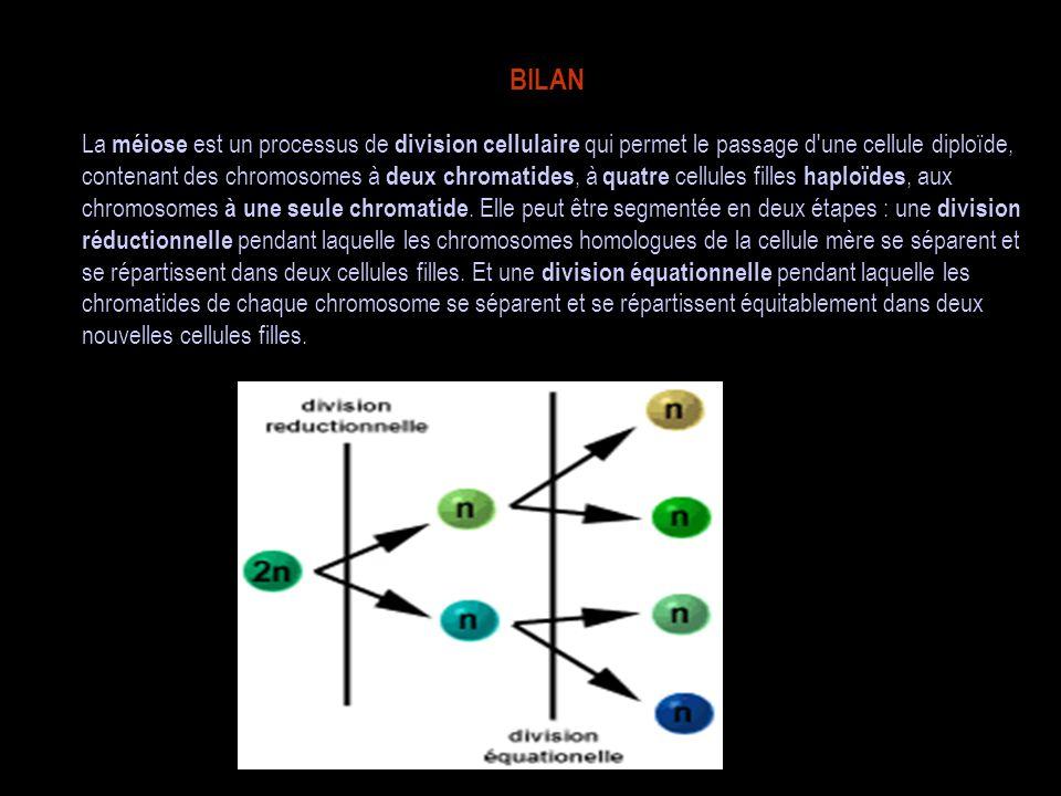 BILAN La méiose est un processus de division cellulaire qui permet le passage d'une cellule diploïde, contenant des chromosomes à deux chromatides, à