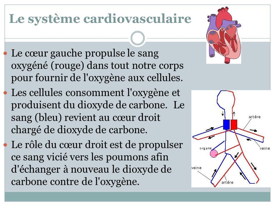 Le système cardiovasculaire Le cœur gauche propulse le sang oxygéné (rouge) dans tout notre corps pour fournir de l'oxygène aux cellules. Les cellules