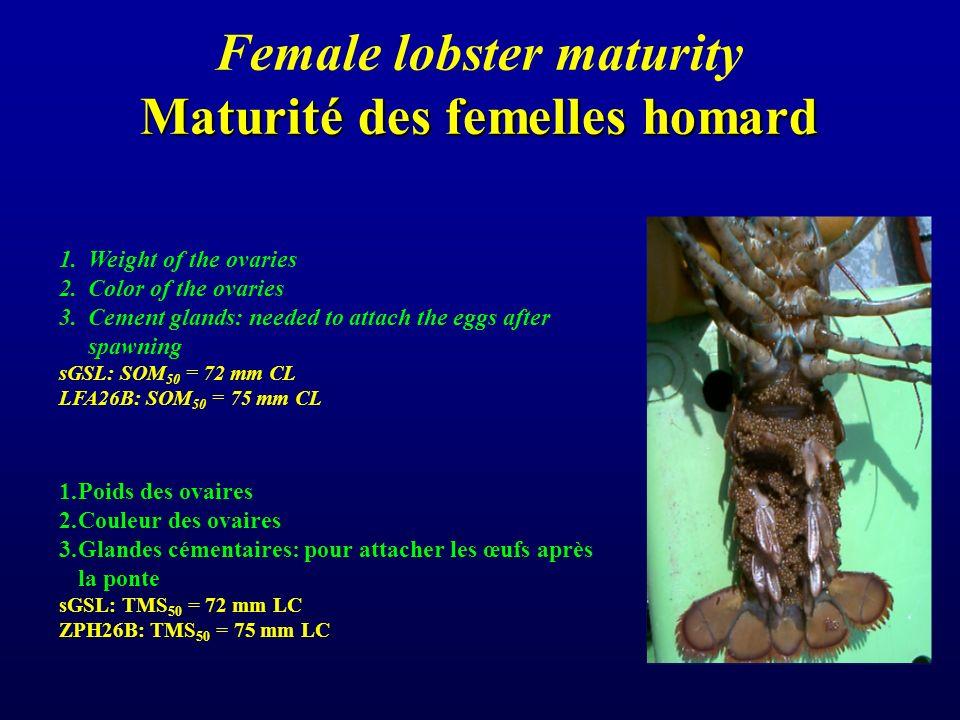 Maturité des femelles homard Female lobster maturity Maturité des femelles homard 1.Weight of the ovaries 2.Color of the ovaries 3.Cement glands: needed to attach the eggs after spawning sGSL: SOM 50 = 72 mm CL LFA26B: SOM 50 = 75 mm CL 1.Poids des ovaires 2.Couleur des ovaires 3.Glandes cémentaires: pour attacher les œufs après la ponte sGSL: TMS 50 = 72 mm LC ZPH26B: TMS 50 = 75 mm LC