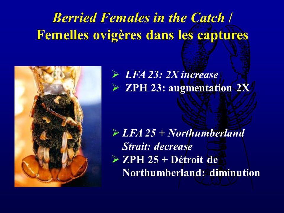 LFA 23: 2X increase ZPH 23: augmentation 2X LFA 25 + Northumberland Strait: decrease ZPH 25 + Détroit de Northumberland: diminution Berried Females in the Catch / Femelles ovigères dans les captures