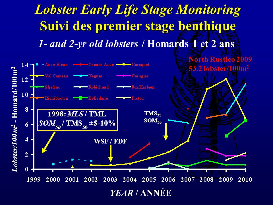 YEAR / ANNÉE Lobster/100 m 2 - Homard/100 m 2 1- and 2-yr old lobsters / Homards 1 et 2 ans Lobster Early Life Stage Monitoring Suivi des premier stage benthique WSF / FDF TMS 35 SOM 35 1998: MLS / TML SOM 50 / TMS 50 ±5-10% North Rustico 2009 53.2 lobster/100m 2