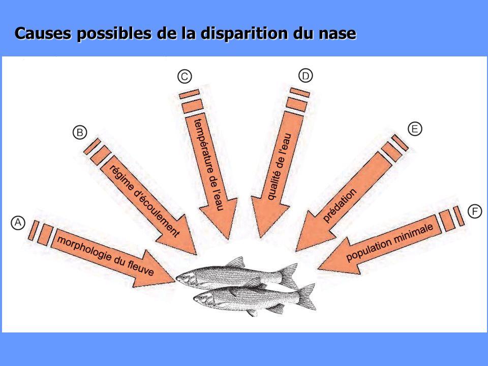 Causes possibles de la disparition du nase