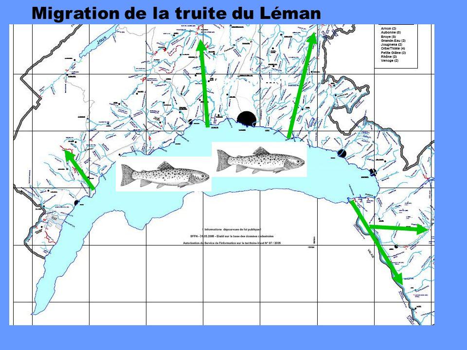Migration de la truite du Léman Reproduction