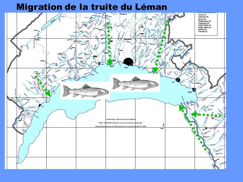 Migration de la truite du Léman Dévalaison des juvéniles
