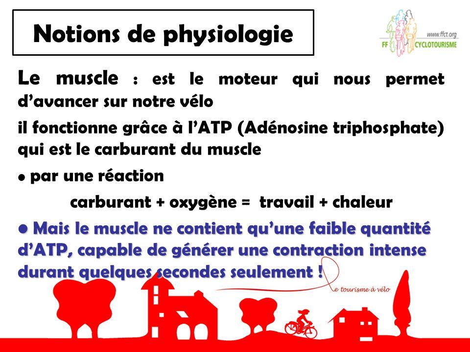 Notions de physiologie Le muscle : est le moteur qui nous permet davancer sur notre vélo il fonctionne grâce à lATP (Adénosine triphosphate) qui est l