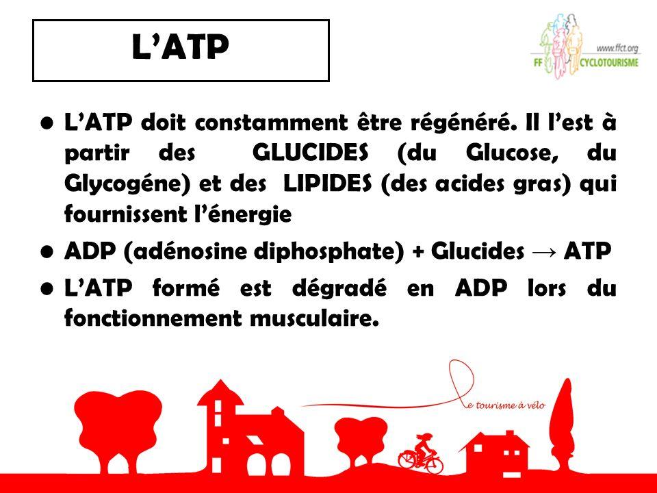 LATP LATP doit constamment être régénéré. Il lest à partir des GLUCIDES (du Glucose, du Glycogéne) et des LIPIDES (des acides gras) qui fournissent lé