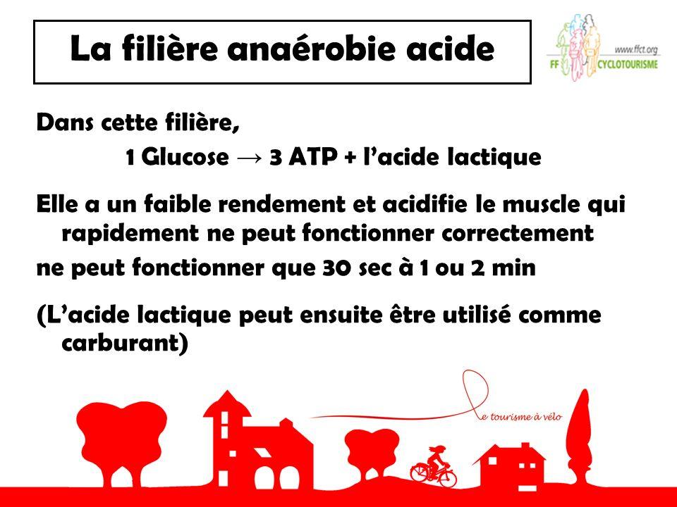 La filière anaérobie acide Dans cette filière, 1 Glucose 3 ATP + lacide lactique Elle a un faible rendement et acidifie le muscle qui rapidement ne peut fonctionner correctement ne peut fonctionner que 30 sec à 1 ou 2 min (Lacide lactique peut ensuite être utilisé comme carburant)