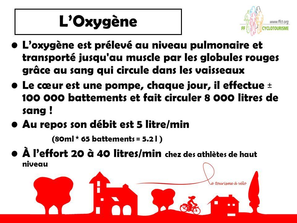 LOxygène Loxygène est prélevé au niveau pulmonaire et transporté jusqu au muscle par les globules rouges grâce au sang qui circule dans les vaisseaux Le cœur est une pompe, chaque jour, il effectue ± 100 000 battements et fait circuler 8 000 litres de sang .