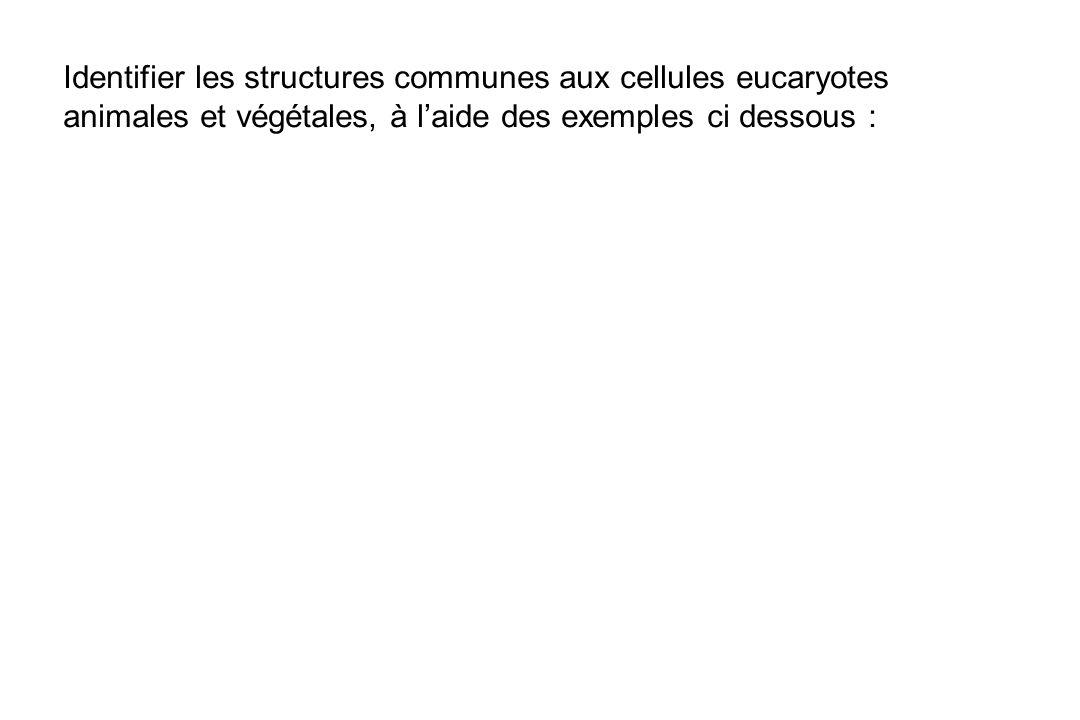 Identifier les structures communes aux cellules eucaryotes animales et végétales, à laide des exemples ci dessous :