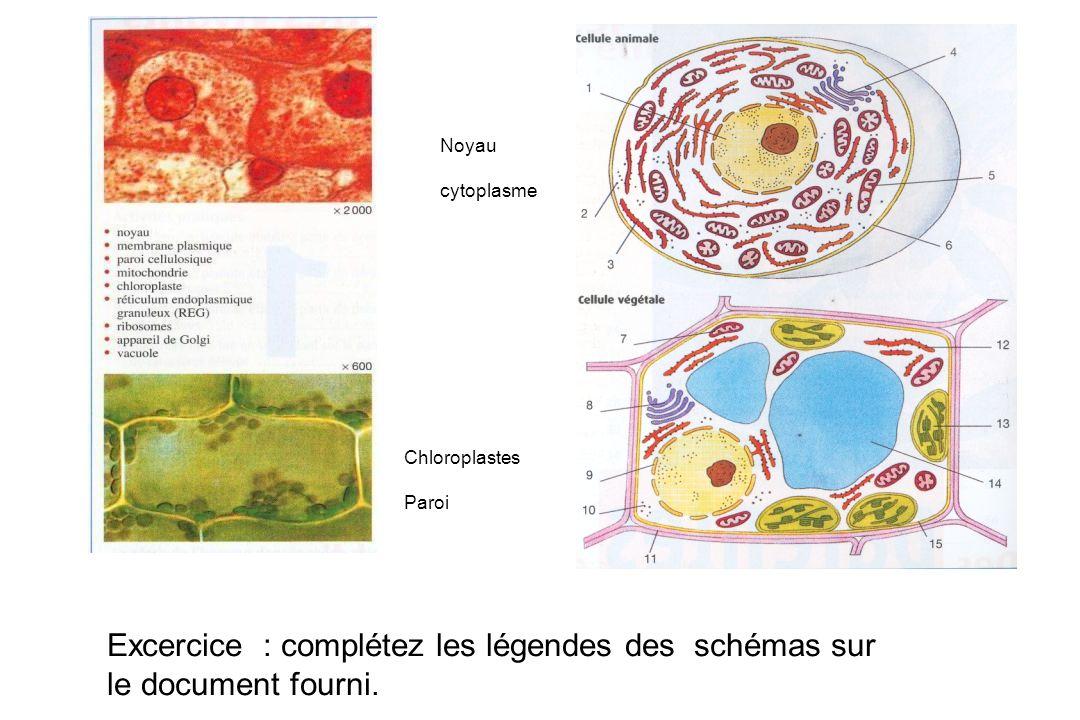 Noyau cytoplasme Chloroplastes Paroi Excercice : complétez les légendes des schémas sur le document fourni.