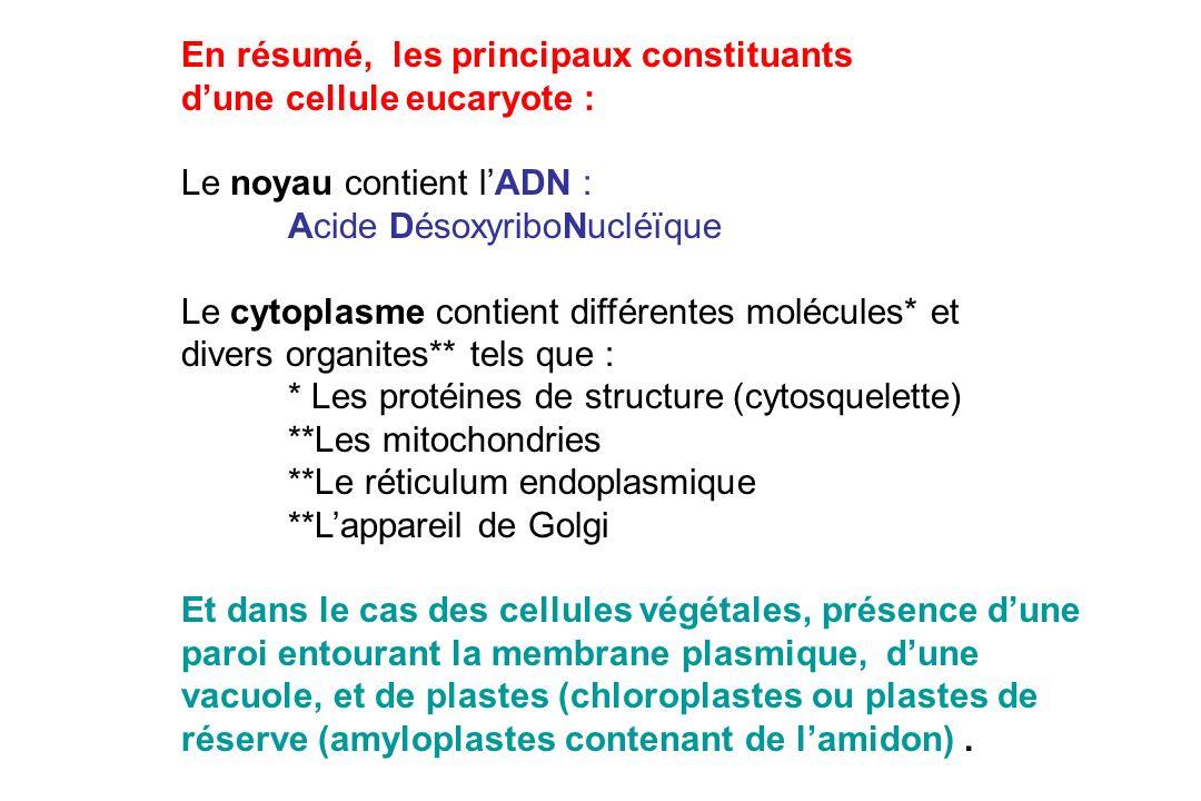En résumé, les principaux constituants dune cellule eucaryote : Le noyau contient lADN : Acide DésoxyriboNucléïque Le cytoplasme contient différentes