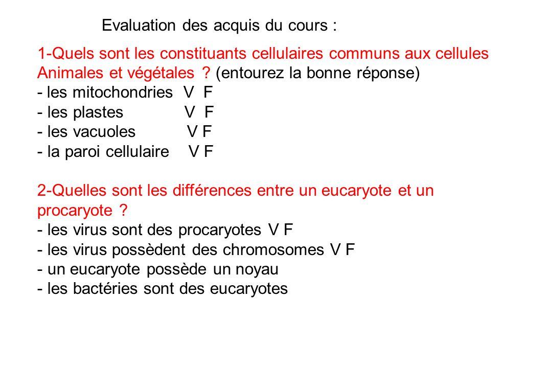 1-Quels sont les constituants cellulaires communs aux cellules Animales et végétales ? (entourez la bonne réponse) - les mitochondries V F - les plast