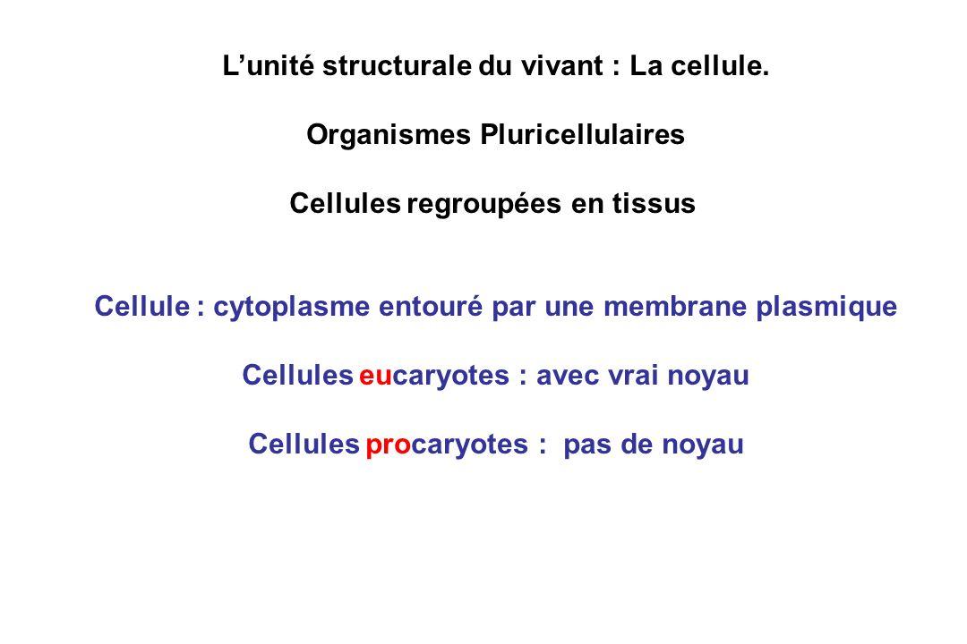 Lunité structurale du vivant : La cellule. Organismes Pluricellulaires Cellules regroupées en tissus Cellule : cytoplasme entouré par une membrane pla