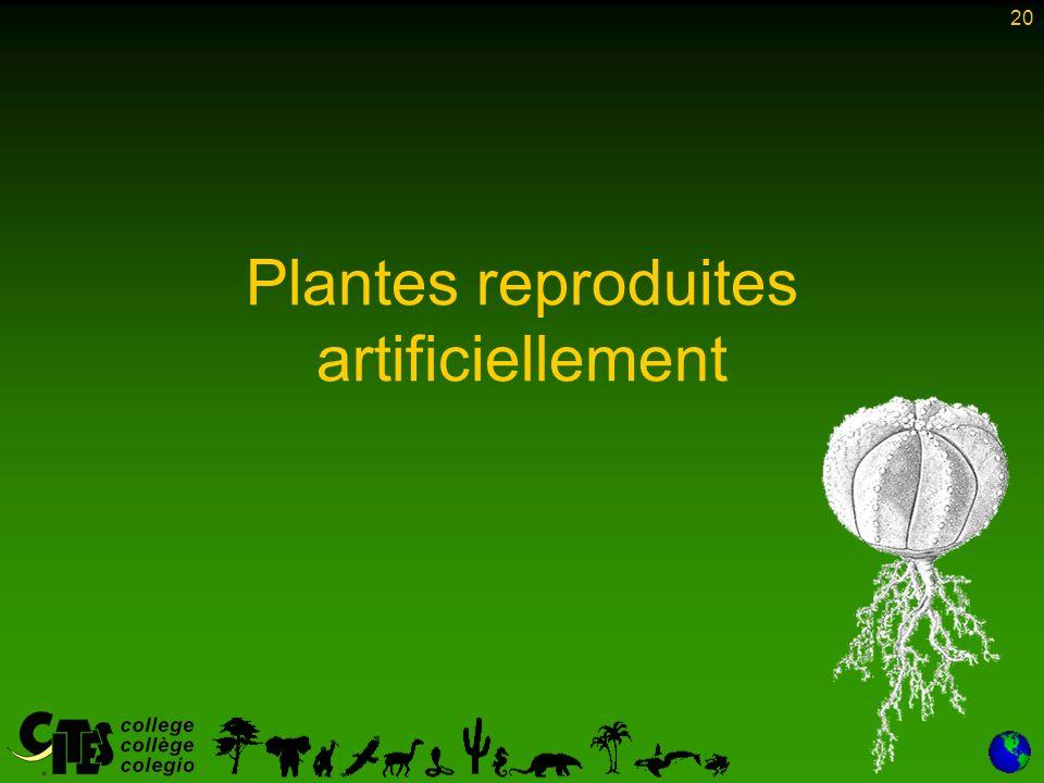 20 Plantes reproduites artificiellement