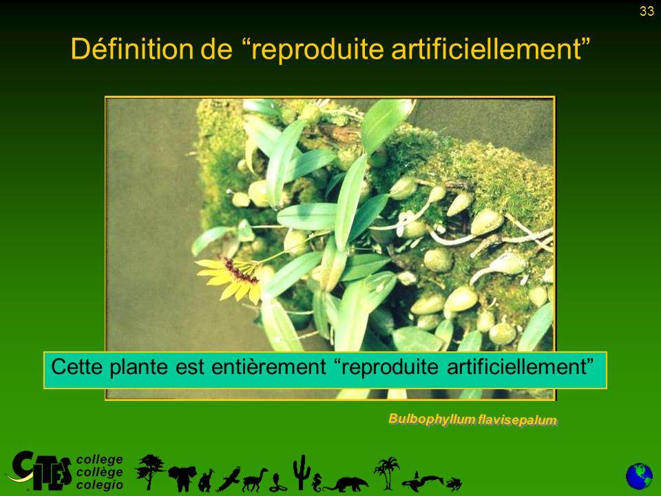 33 Définition de reproduite artificiellement Bulbophyllum flavisepalum Cette plante est entièrement reproduite artificiellement
