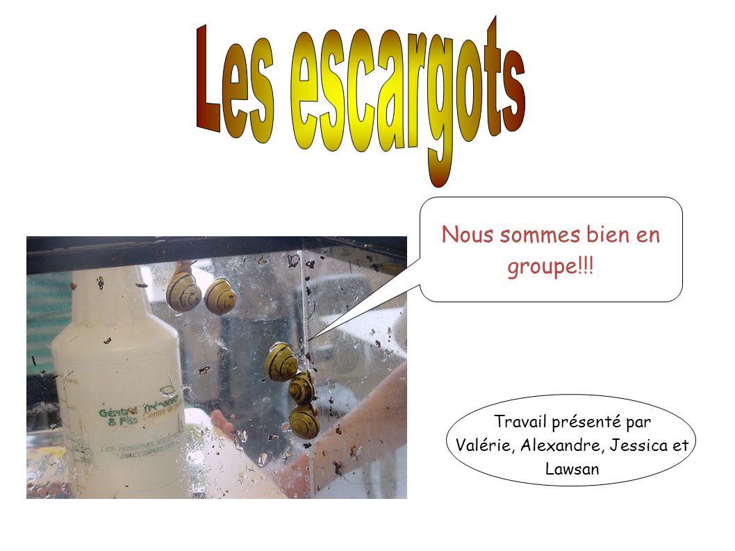 Nous sommes bien en groupe!!! Travail présenté par Valérie, Alexandre, Jessica et Lawsan