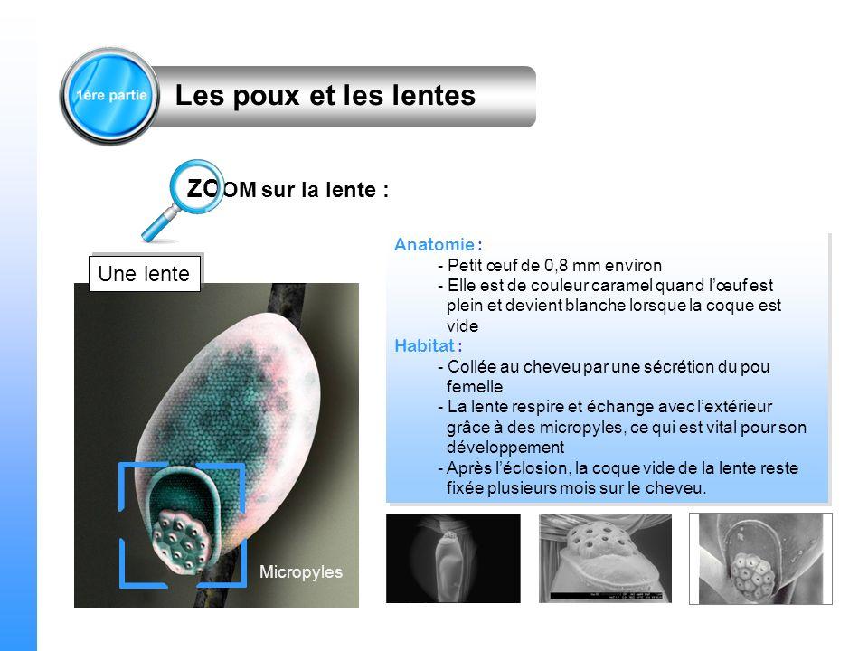 Micropyles ZO OM sur la lente : Les poux et les lentes Anatomie : - Petit œuf de 0,8 mm environ - Elle est de couleur caramel quand lœuf est plein et