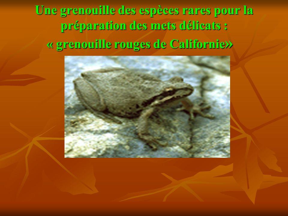 Une grenouille des espèces rares pour la préparation des mets délicats : « grenouille rouges de Californie » Une grenouille des espèces rares pour la