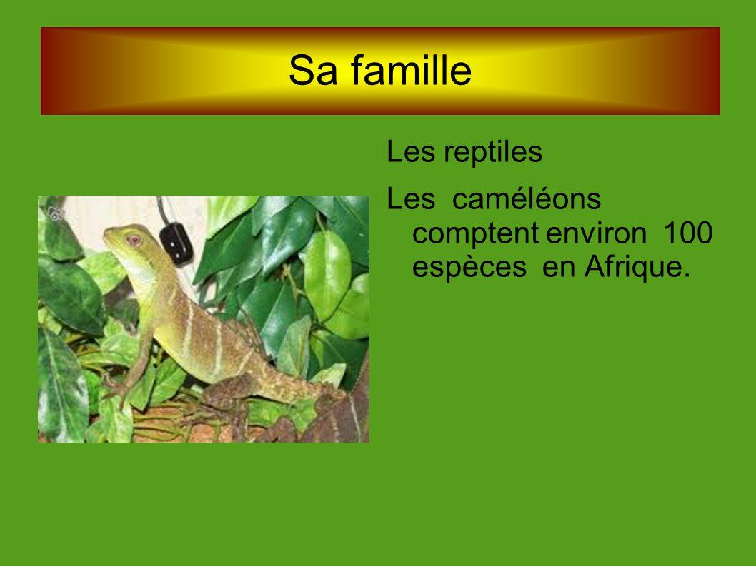 Sa famille Les reptiles Les caméléons comptent environ 100 espèces en Afrique.