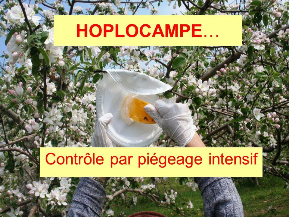 HOPLOCAMPE… Contrôle par piégeage intensif
