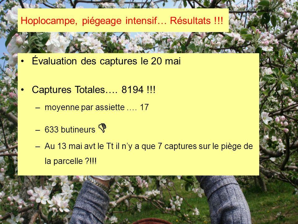 Hoplocampe, piégeage intensif… Résultats !!! Évaluation des captures le 20 mai Captures Totales…. 8194 !!! –moyenne par assiette ….17 –633 butineurs –
