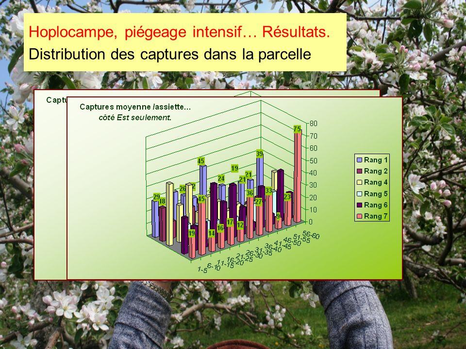 Hoplocampe, piégeage intensif… Résultats. Distribution des captures dans la parcelle