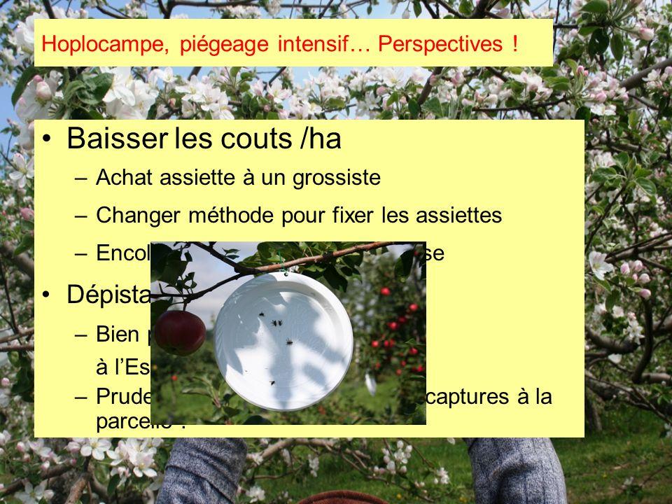 Baisser les couts /ha –Achat assiette à un grossiste –Changer méthode pour fixer les assiettes –Encoller les assiettes avant la pose Dépistage –Bien p
