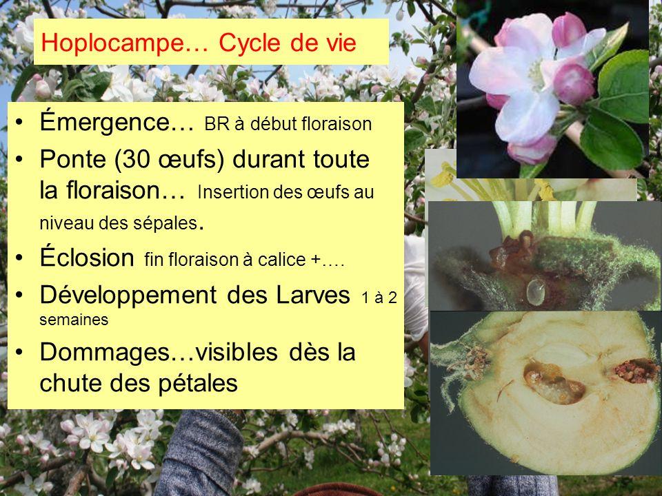 Hoplocampe… Cycle de vie Émergence… BR à début floraison Ponte (30 œufs) durant toute la floraison… Insertion des œufs au niveau des sépales. Éclosion